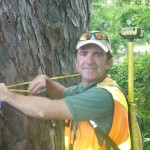 Taking mahogany stem diameter during a roadside tree inventory