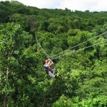 Antiguan Forest Canopy Tour, Annual Tree Safety Inspection