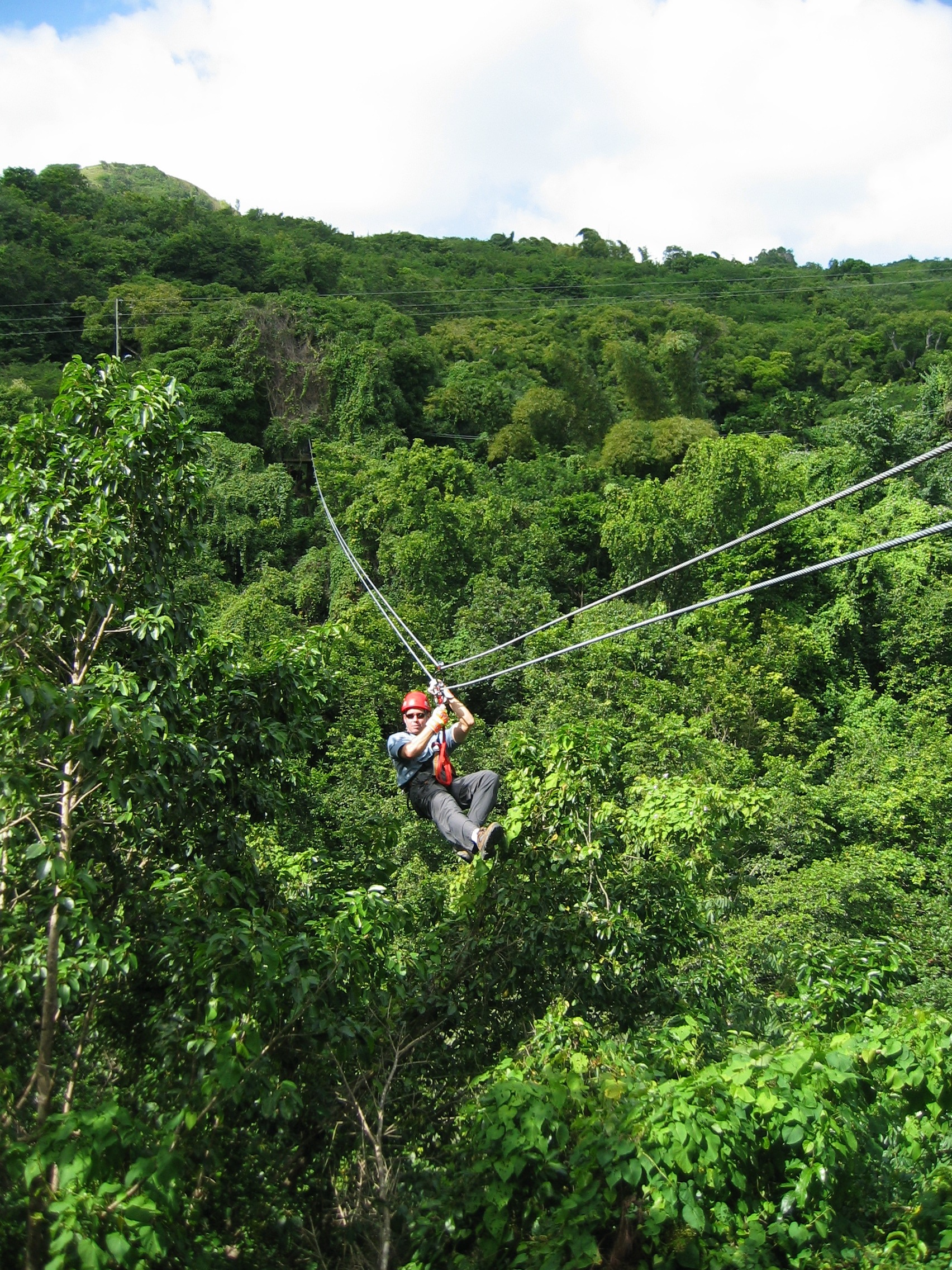 Antiguan Forest Canopy Tour Annual Tree Safety Inspection & Antiguan Forest Canopy Tour Annual Tree Safety Inspection ...