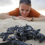 Liz Zimmer, Geographic Consulting's Field Director for the 2013 Leatherback nesting season as Sandy Point National Wildlfe Refuge