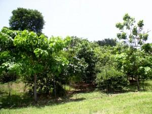 Experimental plot in 2005